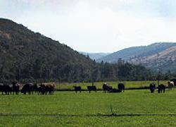farm-scene